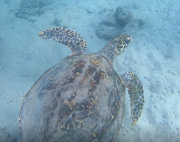 Sea Turtle Picture