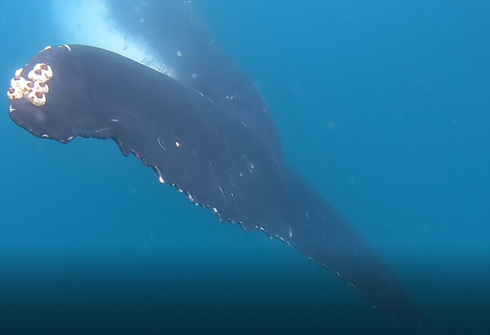Best Fraser Island Tours Whale Tail Photo